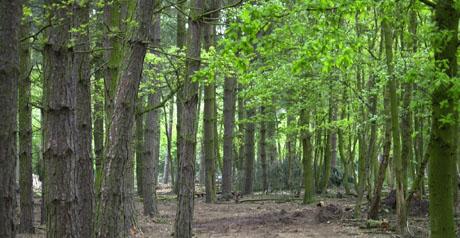 bosco - foresta