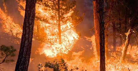 foresta a fuoco2