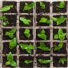 filiere agroalmentari - coltivazione orto - agricoltura