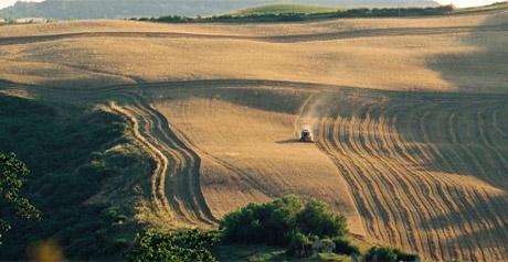 Marche bio - agricoltura
