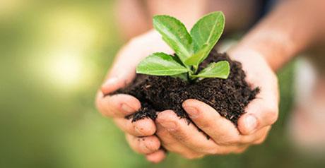 agricoltura - orto - coltivazione