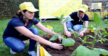 lavoro green - coltivare - orto
