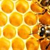 api - miele