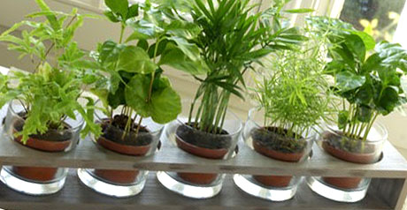ufficio verde - piante3