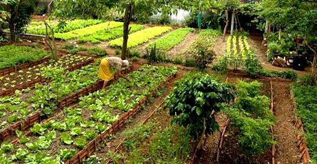 agricoltura Greenpeace2