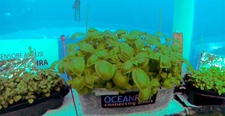 coltivare sott'acqua
