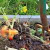 compost - raccolta differenziata umido
