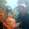 turismo sostenibile subacqueo mare fondali