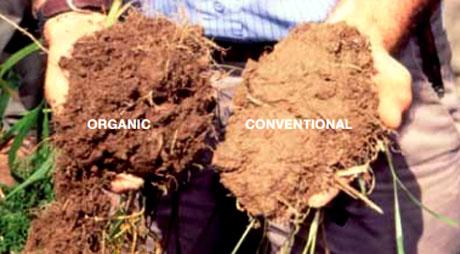 Agricoltura bio vince sulla tradizionale lo stabilisce for Soil mineral content