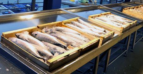 Genova/Inaugurazione Mercato del Pesce Calata Vignoso