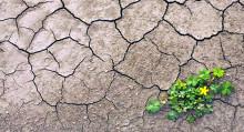 agricoltura cambiamento climatico - suolo - arido - desertificazione