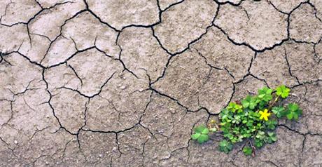 agricoltura cambiamento climatico - suolo - arido