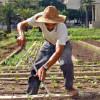 suolo - risorse - agricoltura