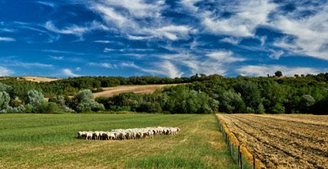 Toscana Paesaggio ambiente biodiversità pascolo