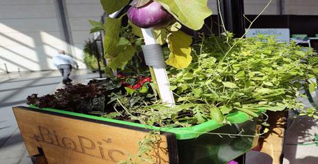 biopic-coltivazione-orto-casa