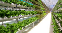 vertical-farm-fattoria-verticale