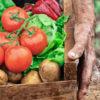 pomodori agricoltura biodinamica