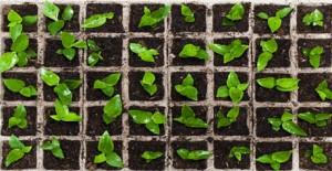 filiere agroalmentari - coltivazione orto